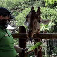 San Antonio Zoo Launches Two New Virtual Summer Camps