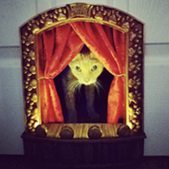 San Antonio Scenic Designer's Cat-Tastic Quarantine Project Featured in <i>New York Times</i>