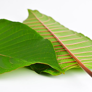 Red Vein Kratom: The Mightiest of Kratom Strains