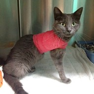 Do You Know Who Hurt This Cat? The Sheriff Wants To Find Out