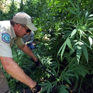 Texas Game Wardens Destroy $6 Million Worth Of Marijuana Plants