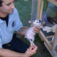 Get a Real Job, San Antonio: Be a Wildlife Specialist