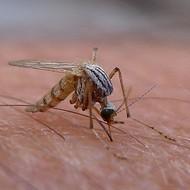 First Bexar County Zika Virus Case Confirmed