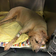 Cash Reward Offered for Information About Dog Left in Dumpster