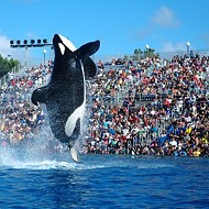 "Coming Soon to SeaWorld: ""Respectful"" Orca Performances"