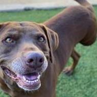 San Antonio Humane Society slashing adoption fees during event with North Shore Animal League