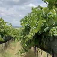 <i>USA Today</i> names San Antonio's Cottonwood Wine Tours one of nation's 10 best wine tours