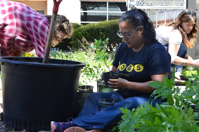 Eco Centro staff and volunteers plant new crops. - LEA THOMPSON