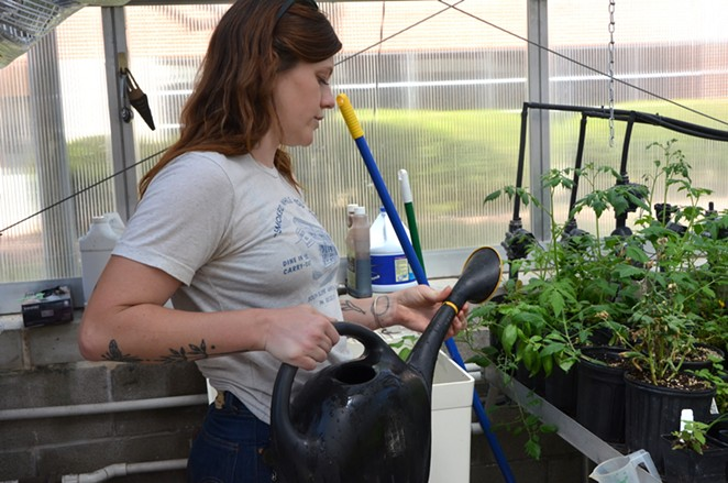 Eco Centro's Cecile Parrish waters plants in a campus greenhouse. - LEA THOMPSON