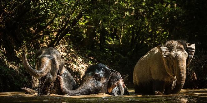 Elephants at the Kulen Forest Sanctuary - COURTESY OF SAN ANTONIO ZOO