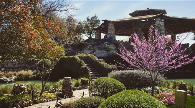 Many of San Antonio's public parks, such as the Japanese Tea Gardens, are clustered downtown, limiting access to residents. - INSTAGRAM / AMITY_RIDGE