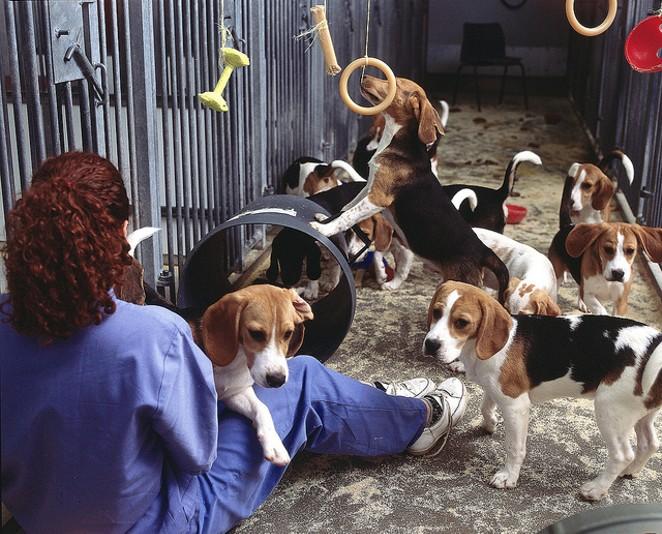 FLICKR USER UNDERSTANDING ANIMAL RESEARCH
