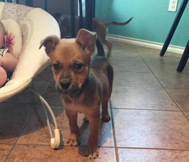 """""""Puppy Power"""" - SAN ANTONIO PETS ALIVE"""