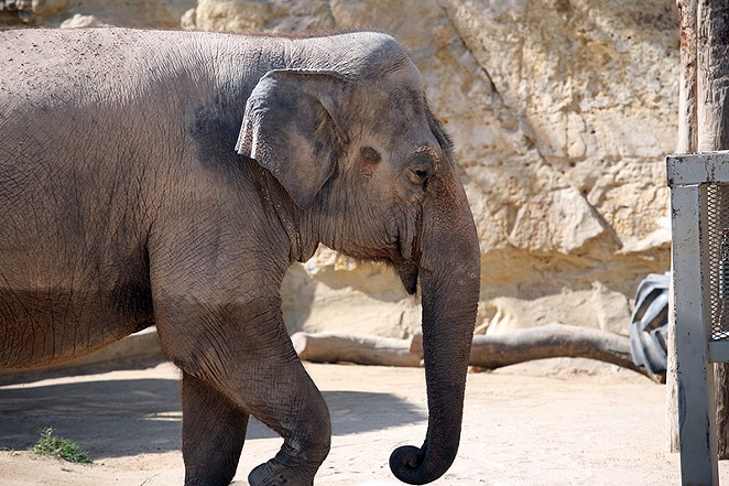 The zoo's lone elephant, Lucky, is too old and ailing to be moved, Morrow said. - ONE WORLD CONSERVATION