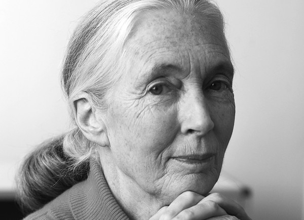 Dr. Jane Goodall will speak at Trinity University on Thursday. - DAVID S. HOLLOWAY