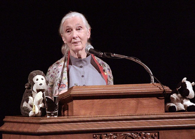 Jane Goodall's lecture at Trinity University sold out within an hour. - ALEX RAMIREZ
