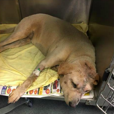 Millie after being pulled out of the dumpster. - ANIMAL CARE SERVICES