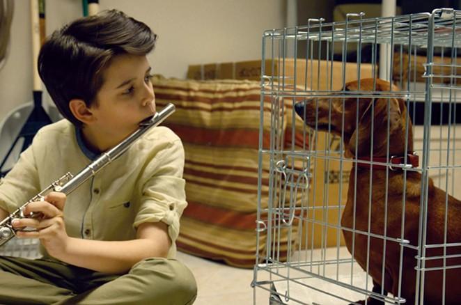 A boy bonds with his new dog in Wiener-Dog. - AMAZON STUDIOS