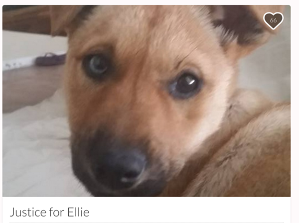James Plant says video of his dog Ellie being mutilated was shared via social media about a week after she went missing near a Waco-area dog park. - SCREENSHOT VIA GOFUNDME.COM