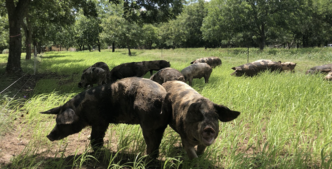 SA's Chef Cooperatives is holding Carnitas for a Cause, a special remote event to benefit nearby Zanzenberg Farm. - COURTESY / CHEF COOPERATIVES