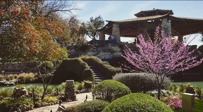 The Japanese Tea Garden is one of San Antonio's many hidden gems. - INSTAGRAM / AMITY_RIDGE