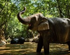 KSAT, <I>The Hill</I> Fall for San Antonio Zoo's April Fools' Day Elephant Prank