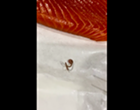 San Antonio Man Finds Worm in Raw Salmon Fillet Purchased at North San Antonio H-E-B