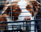 San Antonio bans retail sale of dogs and cats from breeders