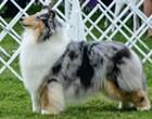 Boerne pup 'Fannie' wins big at 145th Westminster Kennel Club Dog Show