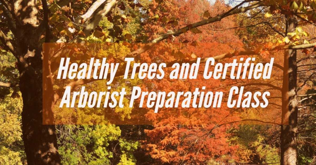 healthy_trees_and_certified_arborists..._sabot.jpg