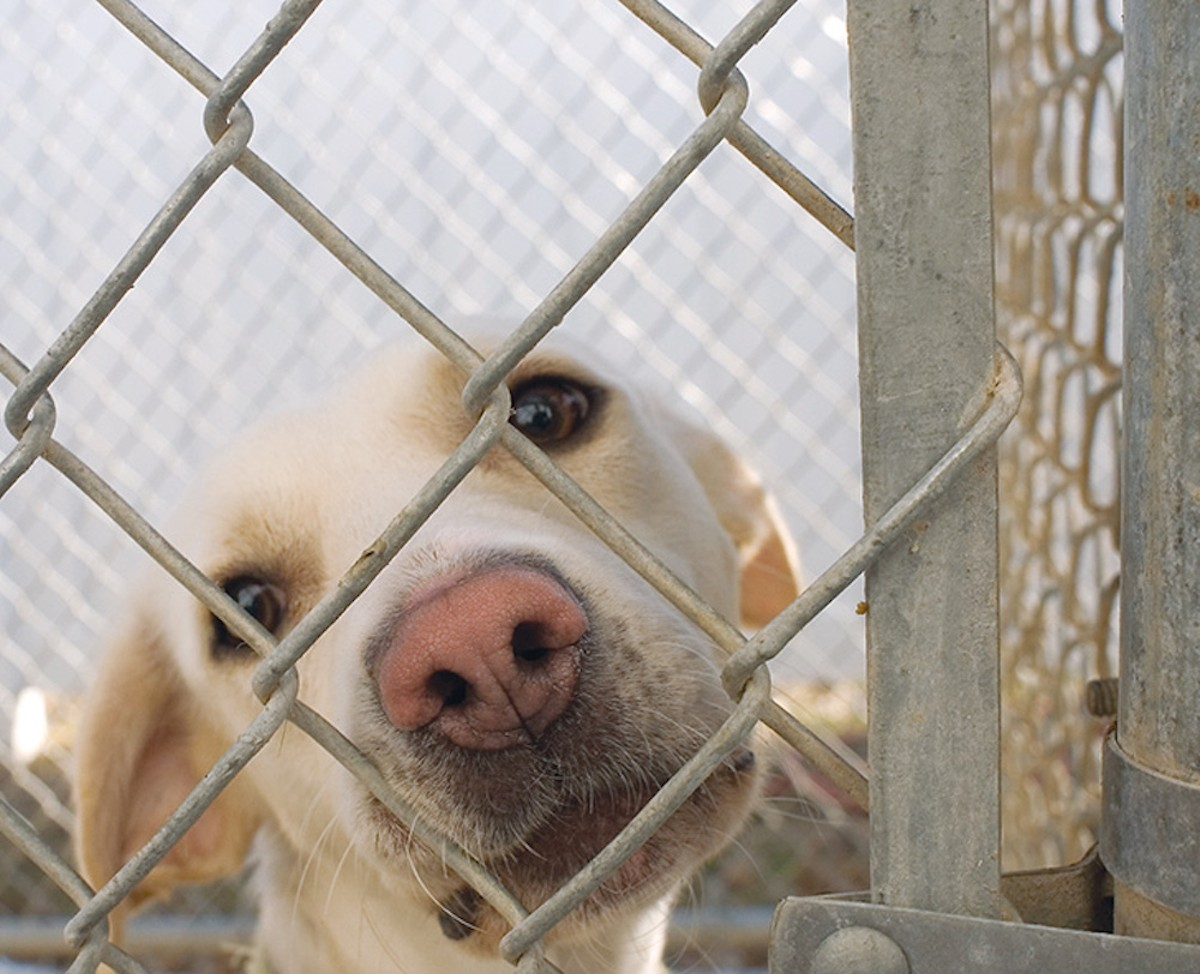 San Antonio Animal Care Services euthanized dogs and cats at its lowest rate ever in December 2015.