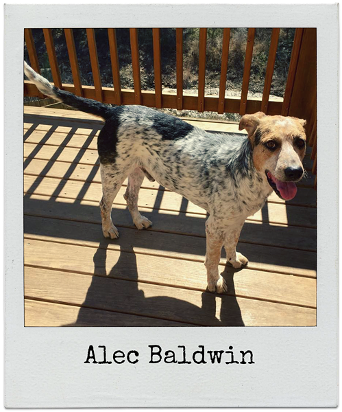 Alec Baldwin is one of the dog competing for SNIPSA's race for the face. Look at his wittle face. - COURTESY