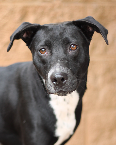 Meet Francis, one of many pets available for adoption from the Animal Defense League - ANIMAL DEFENSE LEAGUE OF TEXAS