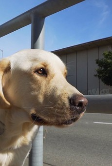 America's Next Top Mongrel: Pick of the Litter Plays Like a Competitive Reality Show on Animal Planet — and That's a Good Thing