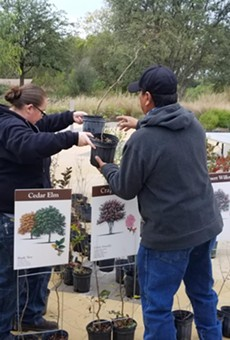 San Antonio River Foundation Hosting Tree Giveaway This Month (2)