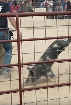 Actor Woody Harrelson Calls on Gov. Greg Abbott to Take Action Against Wild Hog Catching