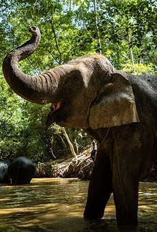 An elephant at the Kulen Forest Sanctuary