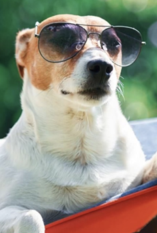 San Antonio Dog-Lovers Can Partake in a Virtual Yappy Hour From Home This Month (2)