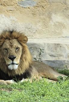 San Antonio Zoo to Increase Attendance Capacity to 50% Starting Saturday