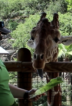 San Antonio Zoo Launches Two New Virtual Summer Camps (4)