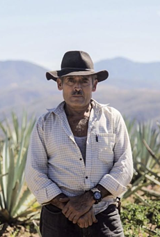 Don Aquilino devoted his entire life to bringing the flavors of the Agave plant into mezcal.