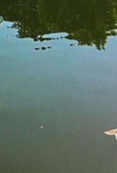 Ammonia Leak in San Pedro Creek Left Dozens of Dead Fish Floating in the San Antonio River