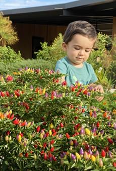 San Antonio Botanical Garden Invites Spice Lovers to Visit for Pequeño Pepper Day