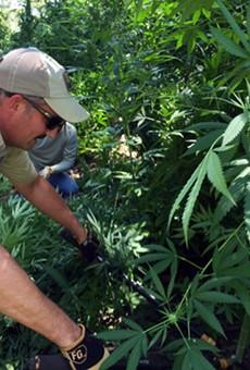 Texas game wardens destroy $6 million worth of marijuana.