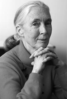 Dr. Jane Goodall will speak at Trinity University on Thursday.