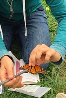 Citizen scientists take part in monarch butterfly tagging effort as they migrate through San Antonio (2)