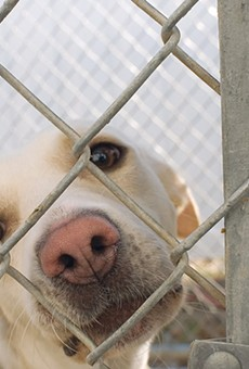 San Antonio Pets Alive will likely receive $375,000.