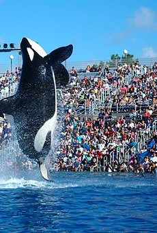 """Coming Soon to SeaWorld: """"Respectful"""" Orca Performances"""