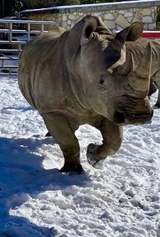 San Antonio Zoo shares adorable photos of animals enjoying the snow