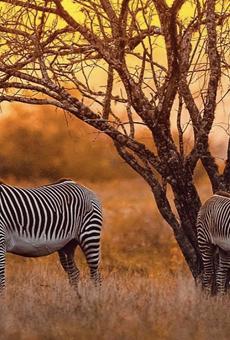 Exotic animal breeder Brian Gilroy wants to build a $500 million safari park on SA's South Side.